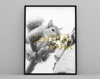 New York Printable poster, lifestyle art print, modern, Scandinavian, squirrel poster, digital file, landscape decoration, white poster