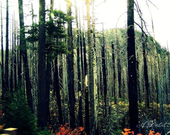 Photography Print Desolate Forest