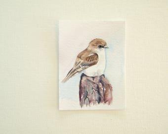 Marico Flycatcher,  tiny bird painting,  original watercolor,  bird aceo,  African bird,  watercolor bird aceo, nature illustration,