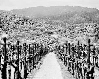 Napa Valley California Vineyard Fine Art Photography Black and White Photo Print (Unframed, Canvas, Framed, Metal or Acrylic) Wall Art