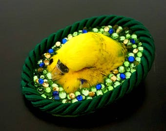 Real stuffed budgie head brooch with real swaroski stones taxidermy bird parakeet rainbow green glitter tropical art
