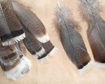 2 wild rare feathers, tail orzak 15-20cms, pow wow.