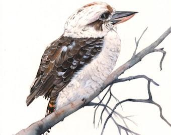 Kookaburra watercolor painting - PRINT of watercolor painting  A4 size print wall art print - bird art print