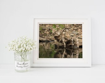 Abstract Photography, Wood Art, Rustic Wall Art, Fallen Tree, Home Decor, Wall Art Prints, Water Photography, Pond Decor, Nature Prints,