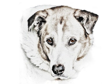 Pet Portrait - Custom dog art -  Digital Sketch Dog - Custom Pet Artwork - sketch from photo - sketch of dog - custom pet portrait