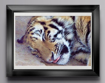 Sleeping Tiger Photograph, Wildlife Photography, Animal Photography, African Safari, Animal Close Up, Tiger Face, Cute Animals, Poster Print