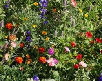 1,000 Seeds Wildflower Deer Resistant Mix Wildflower Mix