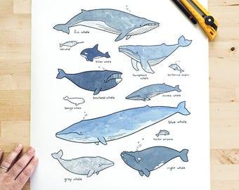 Grandes baleines impression 16 x 20, art d'océan lunatique, pépinière nautique