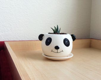 "Cute Succulent Panda Planter 3.5"" Ceramic Pot Crafts"