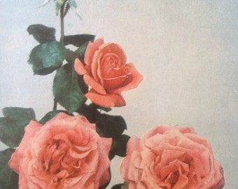 Attention Collage artists! Vintage floral reference book Favorite Flowers in Color 1949