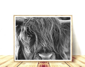Cow Prints, Bull Print, Highland Cow, Digital Download, Cattle Photography, Horizontal Wall Art, Printable Wall Decor, Scottish Highland