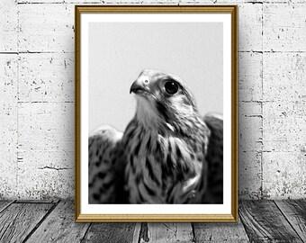 Hawk Print, Bird Print, Nature Print, Falcon Print, Black White Wall Art, Home Decor, Printable Photo, Last Minute Gift