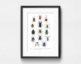 Beetles Art Print | Watercolor Infographic of Beetles | Wall Decor | 11x14 | 13x19