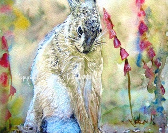 Hare Print Hare Print Shy Hare  Beautiful Giclee Print of  Watercolour and Ink Painting on Watercolour Paper