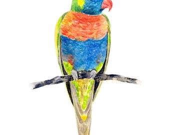 Rainbow Lorikeet Print, Watercolour Parrot, Australian Bird Art, Rainbow Parrot, Bird Illustration, Colourful Bird Print,