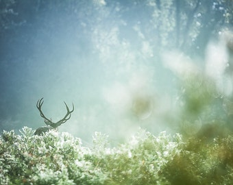 Deer nature photography. Stag antlers wall art. Buck in scenic landscape photo print. Outdoorsman or man cave rustic scenery home decor art