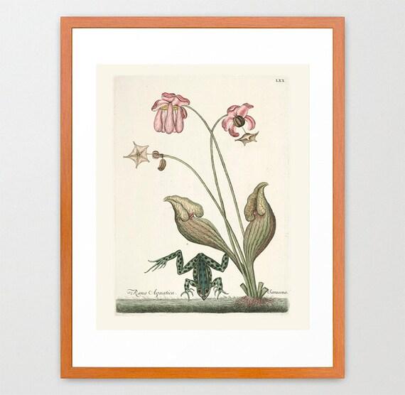 Frog Poster - Nautical Poster - Nautical Wall Art - Antique Frog - Ocean Wall Art - Frog Print - Aquatic Art