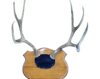 Cushion Mounted 8 Point Deer Antlers on Wood Shield.
