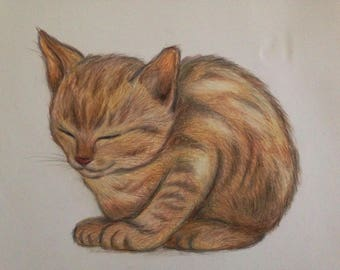 Original Colored Pencil Drawing of Kitten