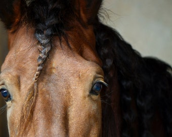 Out of the Shadows, 3Butterflies Photography, horse, brown horse, braided mane, horse face, horse brown eyes, horse in shadows, stable