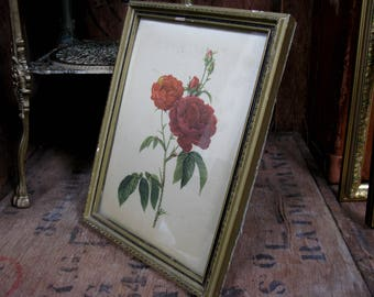 Silk Picture, Silk Flower Picture, Rose Print, Vintage Floral, Botanical Print, Flower Print, Floral Print, Gilt Frame, PJ Redoute, Red Rose