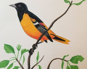 Birds; Oriole. Free Shipping!