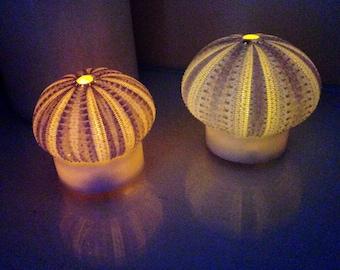 Beach Candle, Sea Urchin Flameless Candles, Sea Urchin Light, LED Candle, Nautical Candle, Sea Urchin Candle, Seashell Candle, Nightlight
