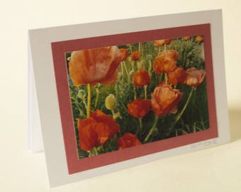 Oriental Poppies Greetings Card