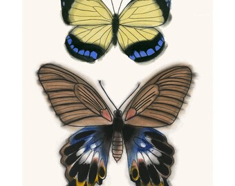 "Butterfly art drawing : Brown and Yellow Butterflies 4"" X 6"" print - 4 for 3 Sale"