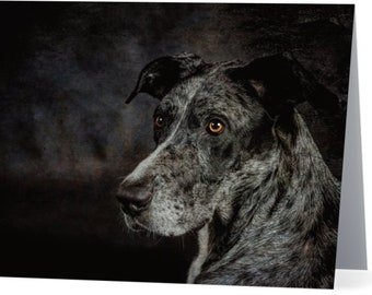 Great Dane - blank note card, Gifts for dog lovers, Gifts for dog people, Cards for dog people, Dog cards