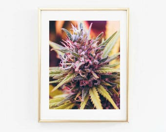Cannabis, Cannabis Flower, Legalize print, weed print, Cannabis Wall art, Cannabis legalize, New art