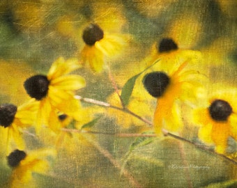 Fine Art Photography, Greeting Card, Fine Art Print, Nature Print, Light, Floral, Black-Eyed Susan Print, Home Wall Art, Girls bedroom