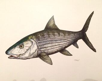 Bonefish Print