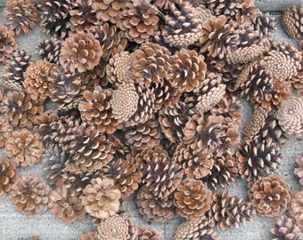 pine cones lot of 50 ponderosa cones larger sizes rustic weddings Christmas crafts fall decorating