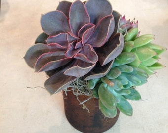 Succulent Arrangement in Bronze Glass Vase
