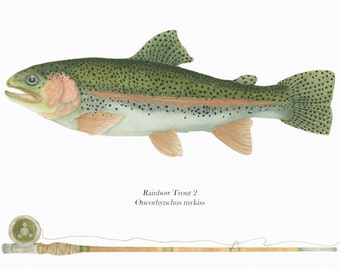 Rainbow Trout 2/ FISH Illustration/ NATURAL SCIENCE/Archival Giclee Print/Green