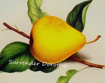Rapalje Seedling Pear Prestele Vintage Agriculture Poster Print  Botanical Lithograph To Frame 232