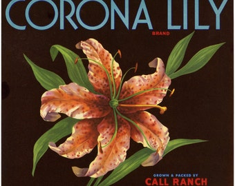 Corona Lily Brand Orange Crate Label