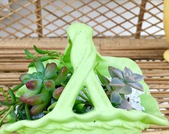Miniature Succulent Arrangement
