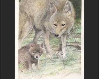 """Wild Families - Coyote Mama and pup 8""""x10"""" matted and framed print"""