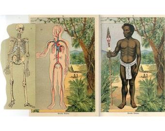 c. 1900 PAPUAN ABORIGINE ANATOMY - interactive 3D lithograph  - original antique print - Indonesia Papua New Guinea -