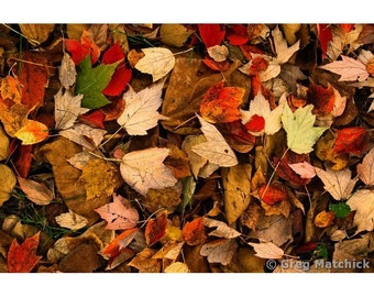 Fine Art Color Nature Photography of Autumn Leaves in Missouri