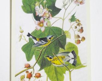Audubon Vintage Bird Image Magnolia Warbler Destash Craft Supply Decoupage Paper Ephemera Scrapbook Card Making Supply Bird Images