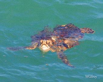 Sea Turtle...Sea Turtle Coastal Florida…Sea Turtle...Photo...Photograph...   Photography...Print