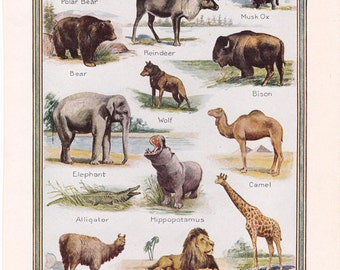 vintage animal illustration, from North to South, a page from a 1920's encyclopedia