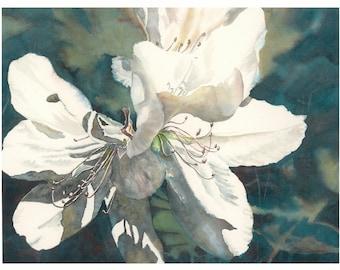 flower PRINT 8 x 10 bowman open edition Azalea Noon southern floral