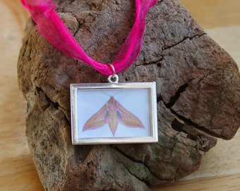 Moth Necklace, Elephant Hawk-moth Miniature Picture Frame Pendant, Organza Cord