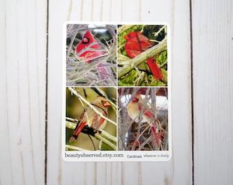 cardinal planner stickers | cardinal photo stickers | full box planner stickers | red bird stickers | vinyl matte stickers | bird sticker