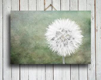 Dried Dandelion - Dandelion photography - Dandelion art - Dandelion decor - Green decor - Dandelion canvas art