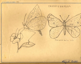 Old pencil drawings from 1956 - Spain